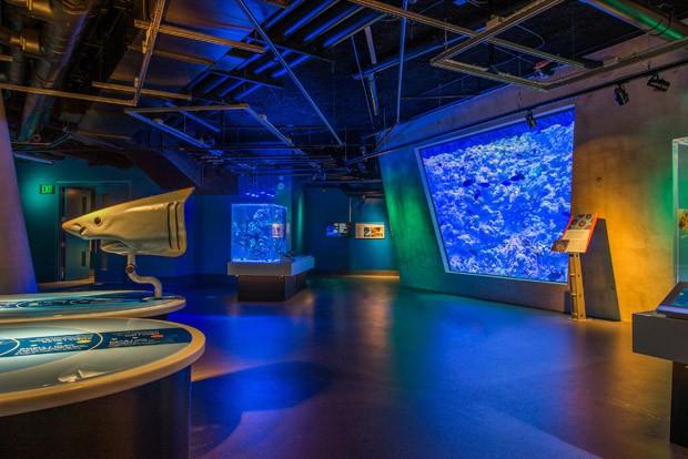 Frost Museum of Science: um tour pelo novo museu de Miami (Foto: Ra-Haus/Divulgação)