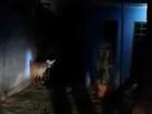 PMA captura lobo-guará na região central de cidade em MS; veja vídeo
