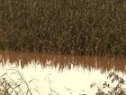 Agricultores somam estragos causados pela chuva no Paraná
