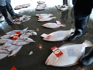 Imagem de arquivo mostra peixes pescados ao sul da usina nuclear de Fukushima, em 2011, com risco de altos níveis de césio. Cooperativas de pescadores da cidade de Ibaraki, na época, decidiram parar de trabalhar, na época, por falta de compradores (Foto: Toru Yamanaka/Arquivo/AFP)