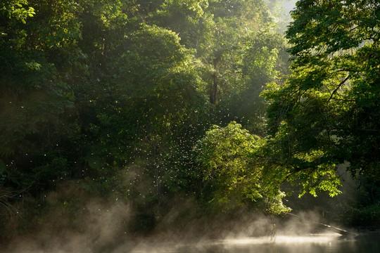 Reserva florestal da Mata Atlântica Legado das Águas, da Votorantim, no Vale do Ribeira, em São Paulo (Foto: Luciano Candisani)