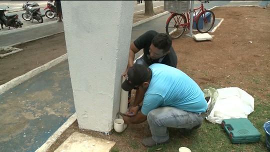 Voluntários alimentam animais de rua no Sertão da PB com canos plásticos