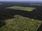 Desmatamento na Amazônia cai 19%, calcula Inpe