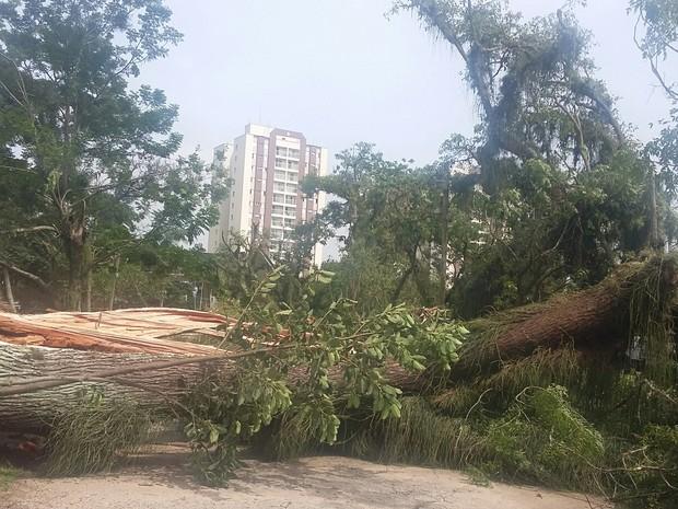 Árvores caem no Parque da Cidade, na zona norte de São José (Foto: Ju Hempfling/Vanguarda Repórter)