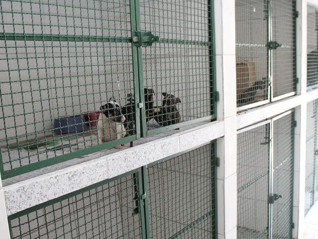 Zoonoses ampliou os serviços em São Vicente (Foto: Divulgação/Prefeitura de São Vicente)