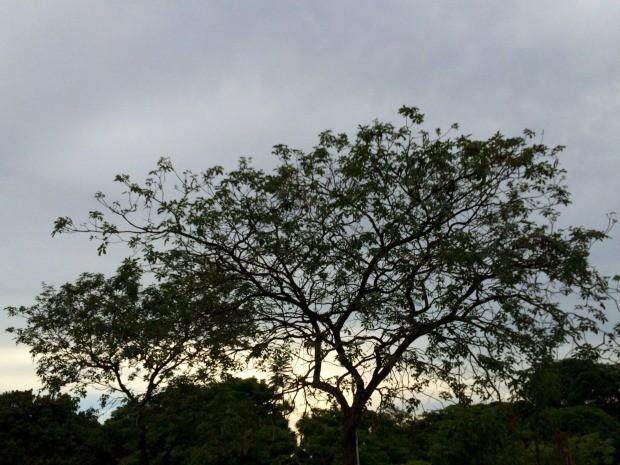 Tempo nublado nesta quarta-feira (2) em Campo Grande (Foto: Isabela Cavalcante/G1 MS)