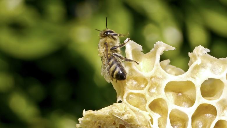 abelha-mel-flor (Foto: Divulgação/Bayer)