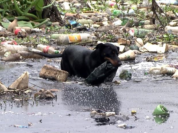 Cão que tira garrafas do Tietê é fêmea e vive com o pessoal que limpa o rio (Foto: Reprodução TV Globo)