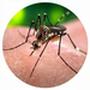 Zika Vírus – Notícias
