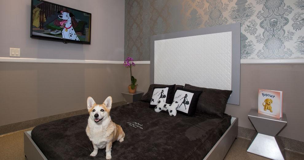 Hotel de luxo para cachorros (Foto: Divulgação)
