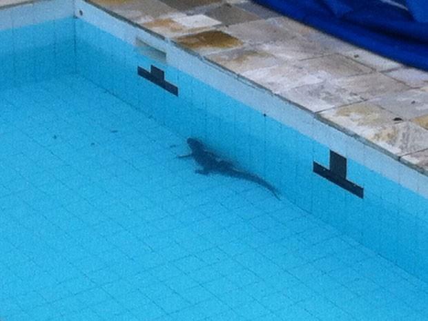 Pais se surpreenderam com jacaré na piscina de colégio na Barra da Tijuca na manhã desta segunda-feira (8)| (Foto: Luis Fernando Reis)