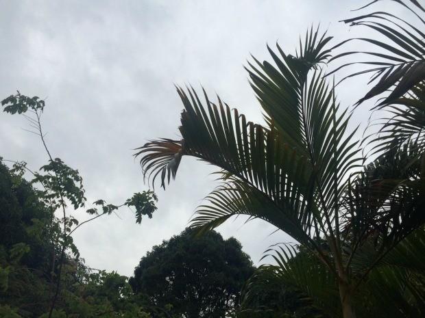 Terça-feira chuvosa em Campo Grande com temperaturas amenas (Foto: Isabela Cavalcante/G1 MS)