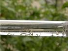 Casos registrados de dengue no TO aumentam, aponta dados da Sesau