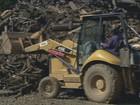 Campinas retira 10% das árvores que caíram no temporal, afirma secretário