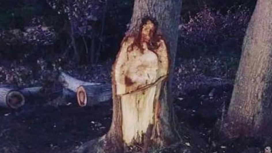'Jesus' talhado misteriosamente em árvore