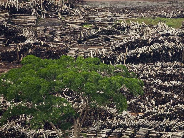 Imagem aérea de desmatamento divulgada pelo Pnuma. (Foto: Divulgação/iStockphoto/Gyi/Pnuma)