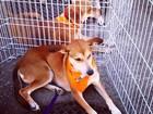 Feira de adoção de animais acontece neste sábado (3) em Petrolina, PE