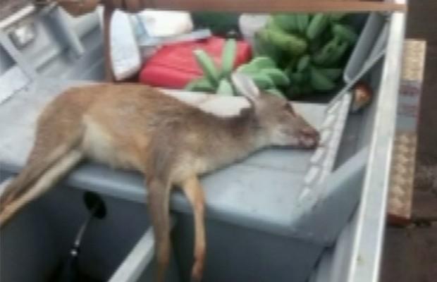 Polícia encontrou um veado morto e peixes pequenos no carro em que vereador estava, em Caçu, Goiás (Foto: Reprodução/TV Anhanguera)