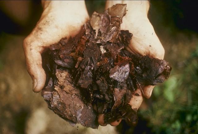 compostagem-terra-folhas (Foto: Creative Commons)