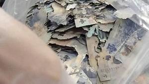 Jovem guarda R$ 68 mil em casa e cupins comem todo o seu dinheiro (Reprodução)