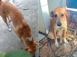 Cachorro cego vive sozinho em terreno. (Foto: Adriana Silveira/ VC no G1)