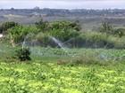 Água de irrigação é racionada no DF e agricultores diminuem área de cultivo
