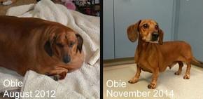Cel mai gras câine din lume