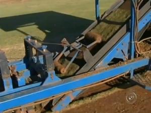 Venda de grama na região deve fechar o semestre com aumento (Foto: Reprodução / TV TEM)