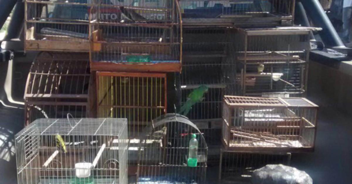 Homem é detido por criar pássaros e jabuti sem autorização em ... - Globo.com