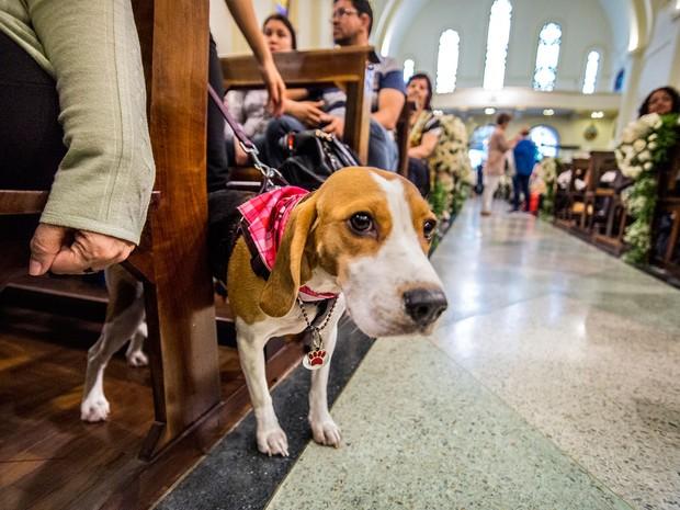 Cachorro aguarda a vez para receber a bênção na Igreja de São Francisco de Assis, em São Paulo (Foto: Cris Faga/Fox Press Photo/Estadão Conteúdo)