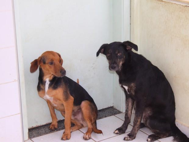 Cães no Departamento de Zoonoses de Valinhos (SP) (Foto: Divulgação/ Prefeitura de Valinhos)