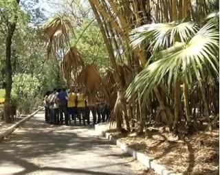 Projeto acontece há cinco anos em Volta Redonda (Foto: Bom Dia Rio)
