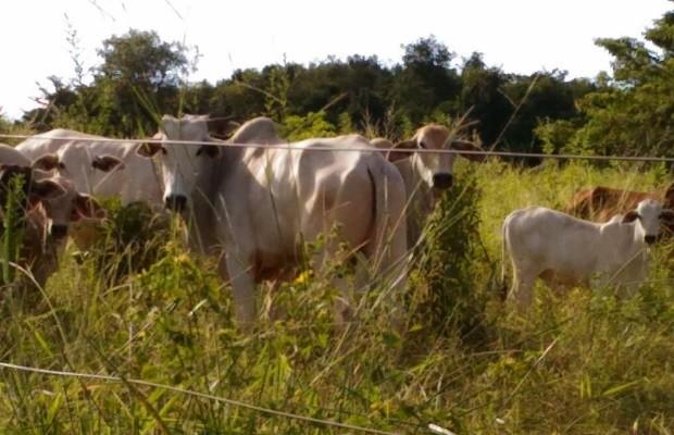 Quadrilha suspeita de roubar gado é presa em Goiás; líder tinha vida de luxo (Foto: Divulgação/Polícia Civil)