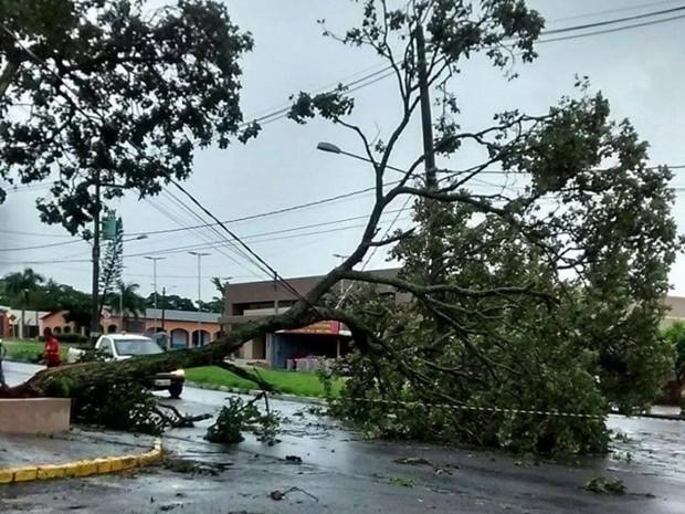 Queda de árvore prejudicou abastecimento elétrico em Piraju (Foto: Arquivo Pessoal/Marcos Fernandes)