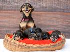 Após ensaio prenha, cadela 'Lilica' faz fotos com os 5 filhotes em MT