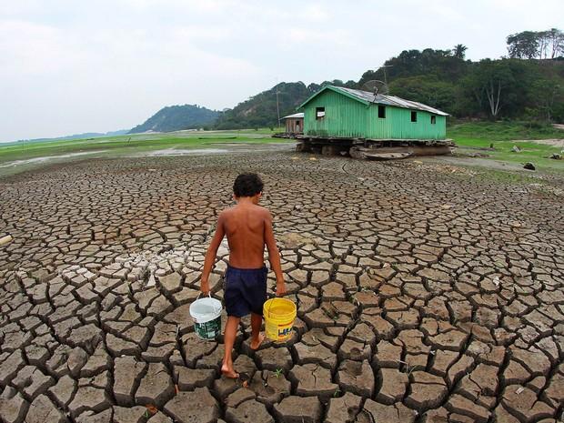 Resultado de imagem para amazonia seca