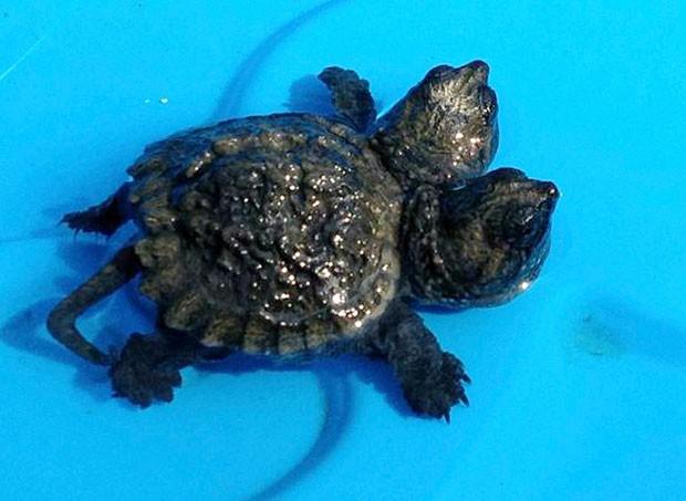 Mulher apelidou a tartaruga de Frank e Stein (Foto: Dan Frye/WLBZ-TV/AP)