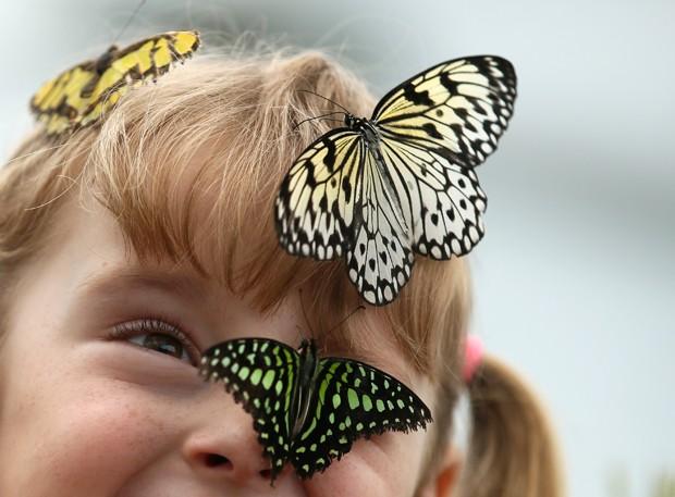 Crianças se tornaram 'aeroportos de borboletas' durante exposição em Londres, na Inglaterra (Foto: Alastair Grant)