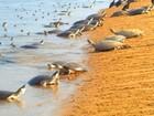 Decreto prevê criação de quatro novas Unidades de Conservação no Pará