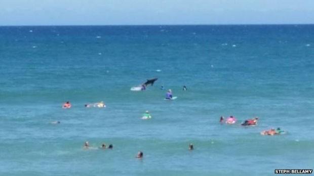 Fotógrafa disse que tubarão saltou duas vezes da água  (Foto: Steph Bellamy)