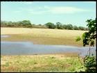 Estiagem compromete lavouras e criações no norte do RJ
