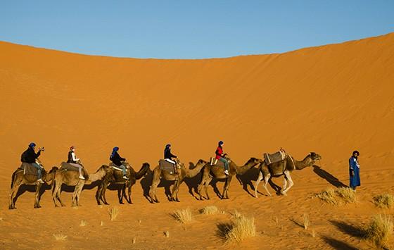 Amarrados uns aos outros, os dromedários são guiados pelo cameleiro (Foto: © Haroldo Castro/Época)