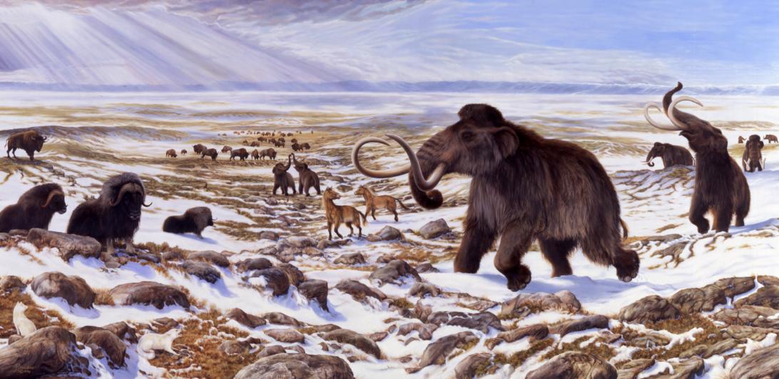 Ilustração mostra como seria ambiente na Era do Gelo com mamute, cavalo selvagem, bisão e boi almiscarado  (Foto: George Teichmann. )