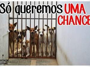Cachorros recolhidos pela Proteger (Foto: Divulgação/ONG Proteger)