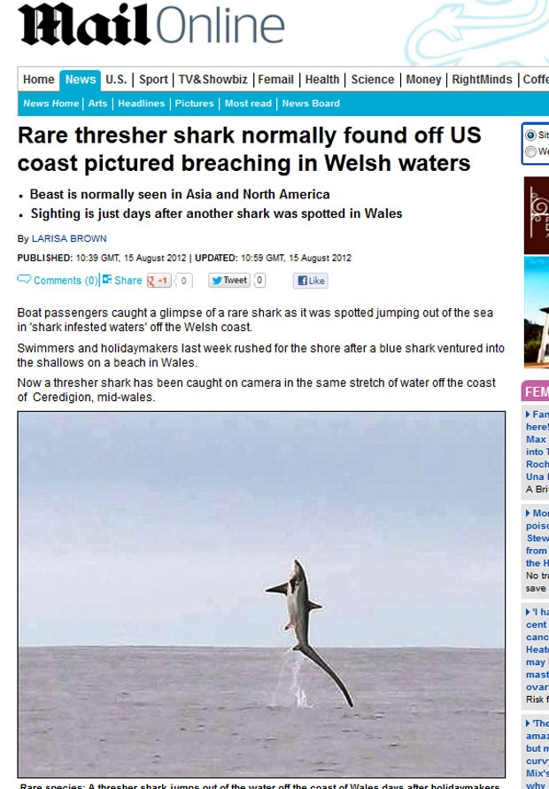 Tubarão-raposa foi flagrado saltando fora da água na costa do País de Galês. (Foto: Reprodução/Daily Mail)
