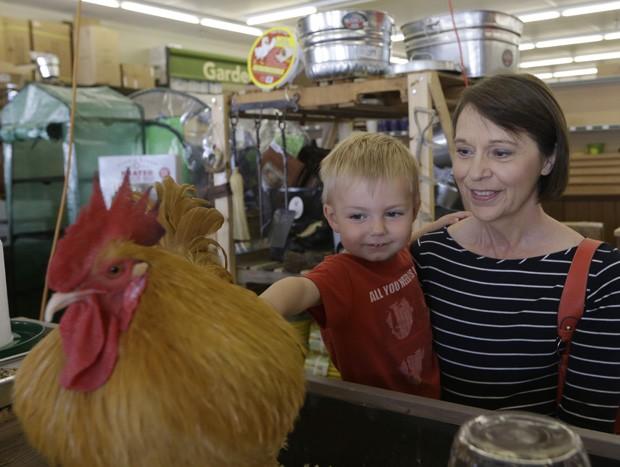 Menino faz carinho no galo 'Príncipe George', o mascote de loja em Dallas, no Texas (EUA) (Foto: LM Otero/AP)