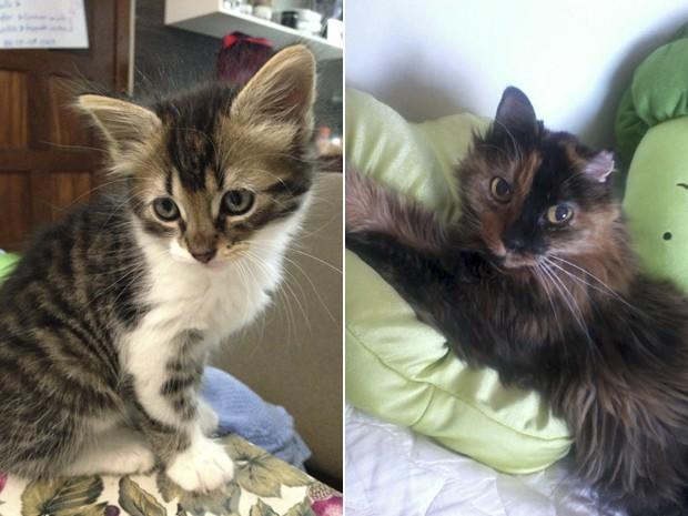 O gato Napoleão (esq.), e a gata Seninha, que foi cremada em novembro de 2012. (Foto: Luíza Glória/Arquivo Pessoal)