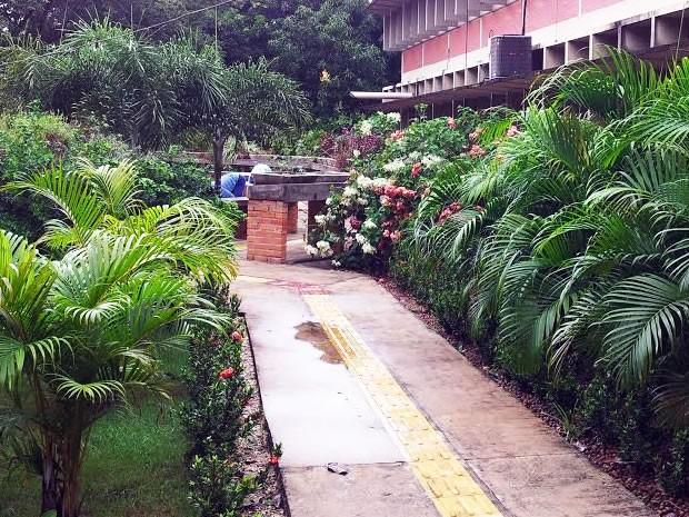 plantas jardim sensorial : plantas jardim sensorial:Jardim sensorial na UFMT (Foto: Edna Hardoim/UFMT)