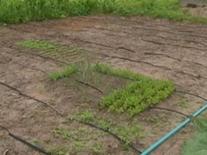 Sistema reutiliza água para agricultura, em Garanhuns (Foto: Reprodução/TV Asa Branca)