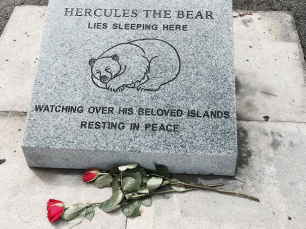 Diz a lápide: 'Hércules, o Urso jaz dormindo aqui, cuidando de suas amadas ilhas. Descanse em paz'. (Foto: BBC/Hercules the Bear A Gentle Giant in the Family I Maggie Robin)